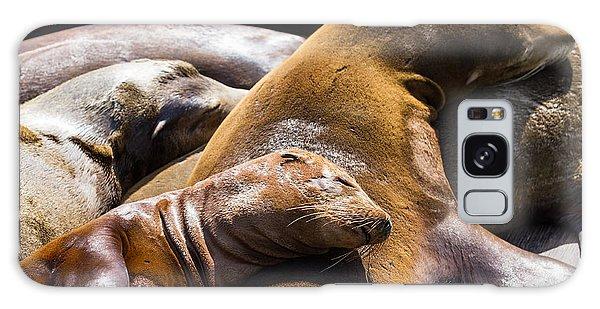 Destination Galaxy Case - Group Of California Sea Lions Sun by Wollertz