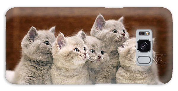 Scottish Galaxy Case - Group Of Cute Gray British Kittens by Kichigin