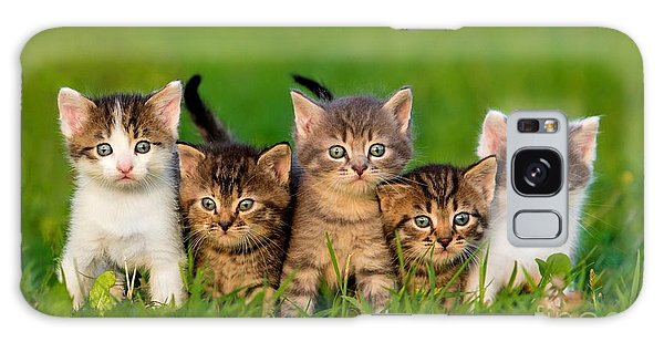 Tabby Galaxy Case - Group Of Five Little Kittens Sitting On by Grigorita Ko