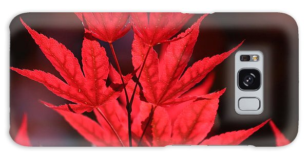 Guardsman Red Japanese Maple Leaves Galaxy Case