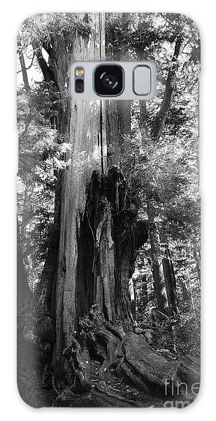 Historic Cedar Galaxy Case