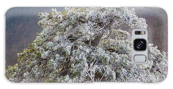 Hoarfrost On Trees Galaxy Case