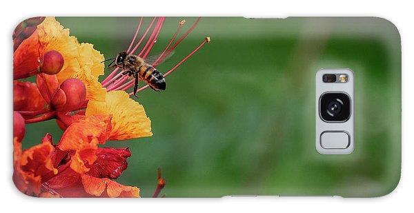 Honey Bee Extraction Galaxy Case