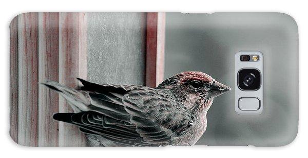 House Finch On Feeder Galaxy Case