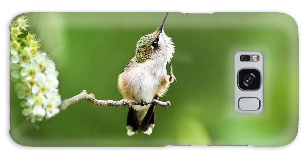 Hummingbird Flexibility Galaxy Case