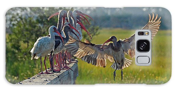 Ibis Joining Featured Friends On Jekyll Island Galaxy Case
