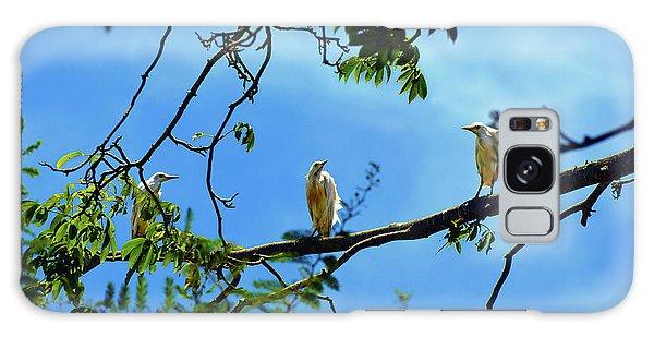 Ibis Perch Galaxy Case