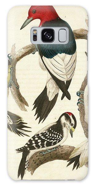 1. Red-headed Woodpecker. 2. Yellow-bellied Woodpecker. 3. Hairy Woodpecker. 4. Downy Woodpecker. Galaxy Case