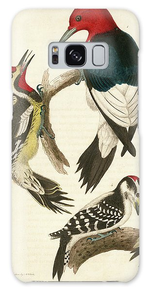 1. Red-headed Woodpecker. 2. Yellow-bellied Woodpecker. 3. Hairy Woodpecker. 4. Downy Woodpecker. Galaxy Case