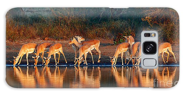 Horizontal Galaxy Case - Impala Herd Aepyceros Melampus Drinking by Johan Swanepoel