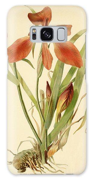 Iris Cuprea Copper Iris.  Galaxy Case