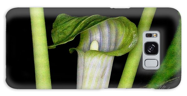 Jack In The Pulpit Galaxy Case