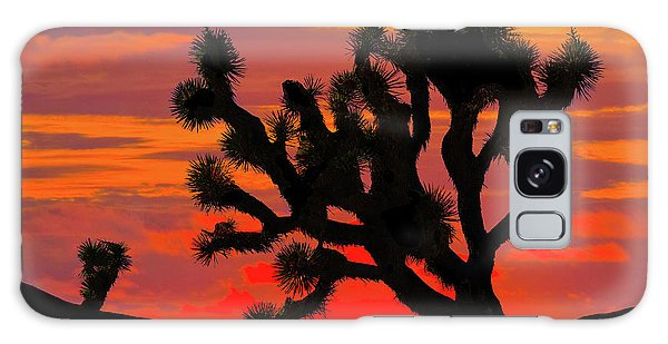 Joshua Tree At Sunset Galaxy Case