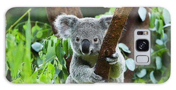 Furry Galaxy Case - Koala Bear In The Zoo by Rickyd