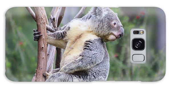 Koala In Tree Galaxy Case