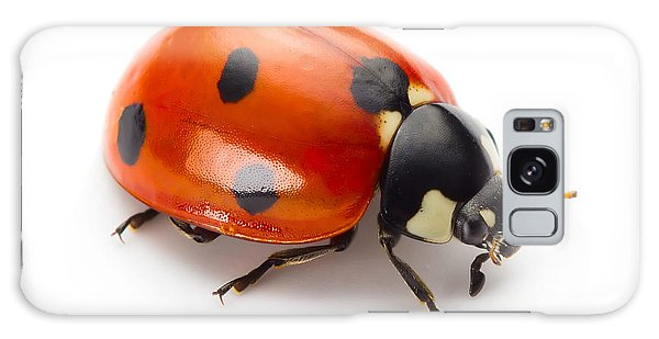 Bright Colors Galaxy Case - Ladybug Insect Isolated On White by Valentina Proskurina