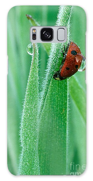 Water Droplets Galaxy Case - Ladybug With Large Dew Droplet On Back by Marc Parsons