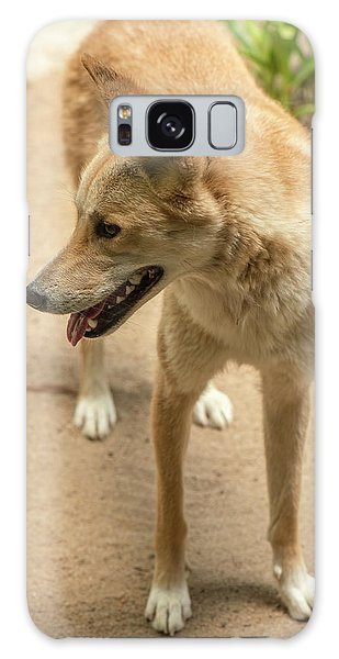 Galaxy Case featuring the photograph Large Australian Dingo Outside by Rob D
