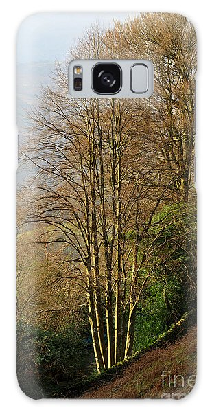 Grasmere Galaxy Case - Late Afternoon Sun On Bare Trees In Autumn Near Grasmere by Louise Heusinkveld