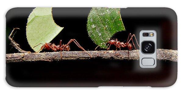 Parasol Galaxy Case - Leaf Cutter Ants, Carrying Leaf, Black by Fotos593