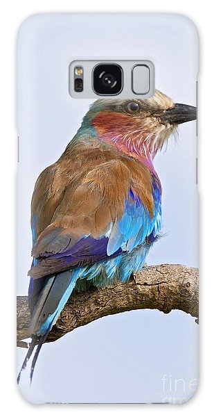 Breast Galaxy Case - Lilacbreasted Roller Coracias Caudata by Johan Swanepoel