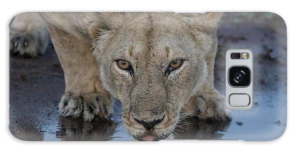 Lioness Drinking Galaxy Case