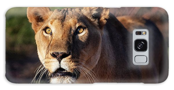 Lioness Looking Up Galaxy Case