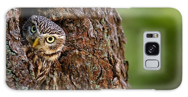 Perches Galaxy Case - Little Owl, Athene Noctua, In The by Ondrej Prosicky
