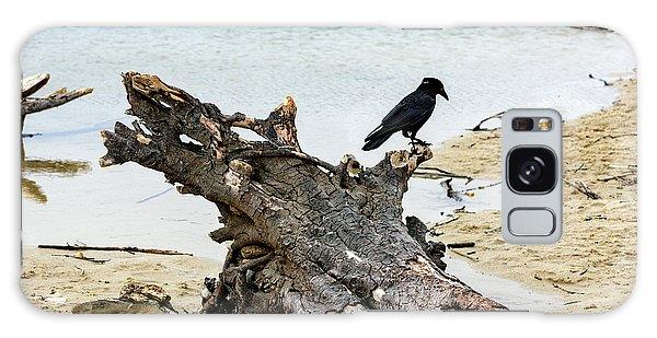 Lone Carmel Crow Atop Driftwood Galaxy Case