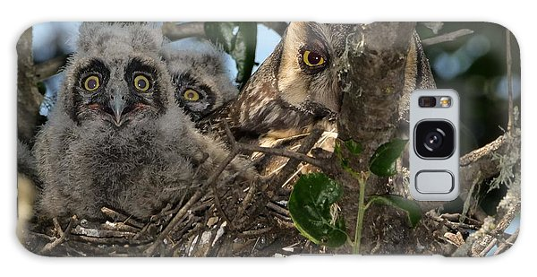 Long-eared Owl And Owlets Galaxy Case