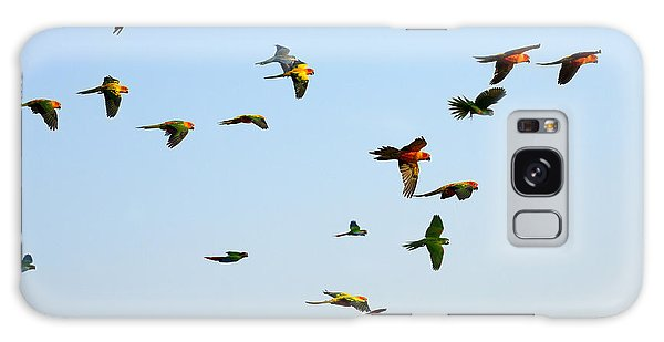 Macaw Galaxy Case - Macaw And Sun Conure Flock Of Flying In by Jeep2499
