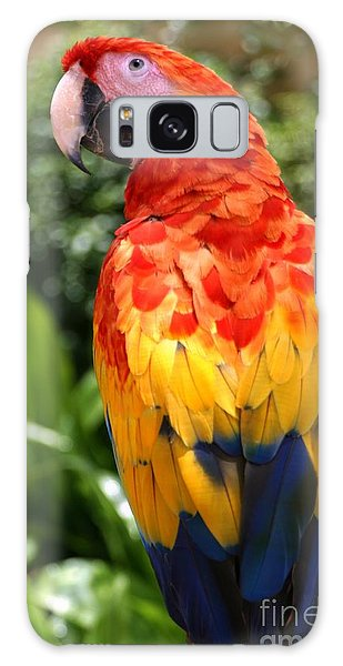 Perches Galaxy Case - Macaw Sitting On A Branch by Paul Banton