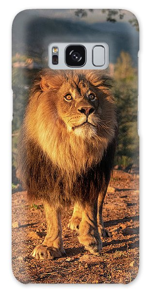 Male African Lion In Early Light Galaxy Case