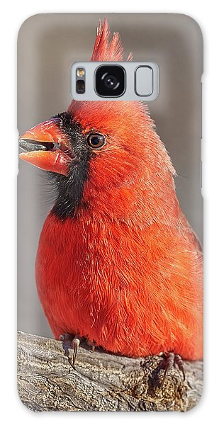 Male Cardinal With Sunflower Seed Galaxy Case