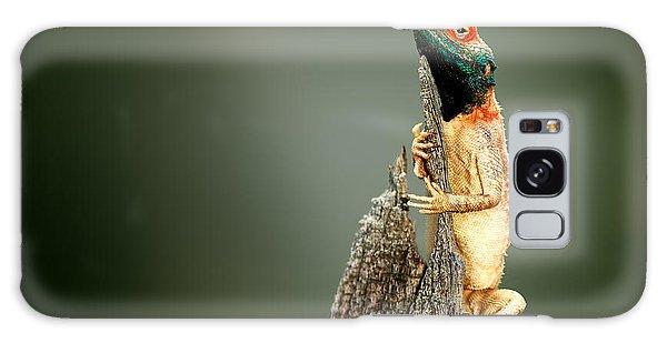 Perches Galaxy Case - Male Ground Agama Agama Aculeata by Johan Swanepoel