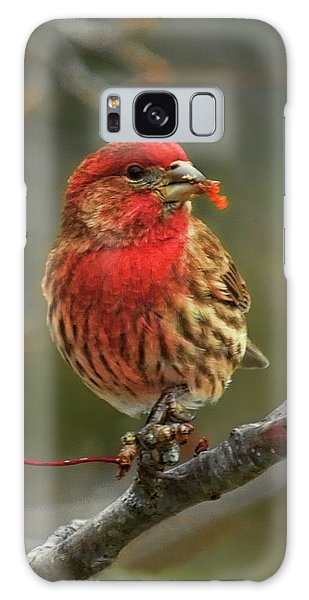 Male House Finch With Crabapple Galaxy Case