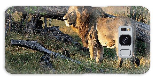 Male Lion In Botswana Galaxy Case