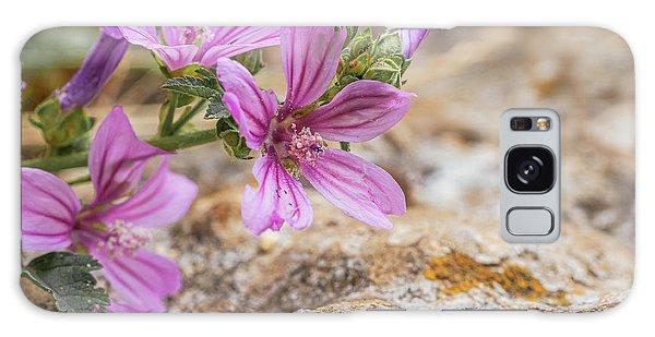 Malva Sylvestris - Spontaneous Flower Of The Tuscan Mountains Galaxy Case