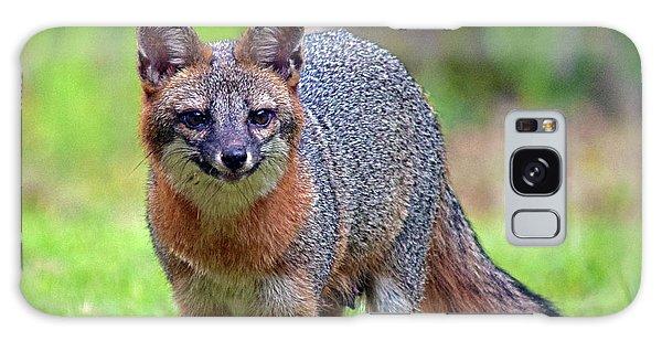 Mama Fox Galaxy Case