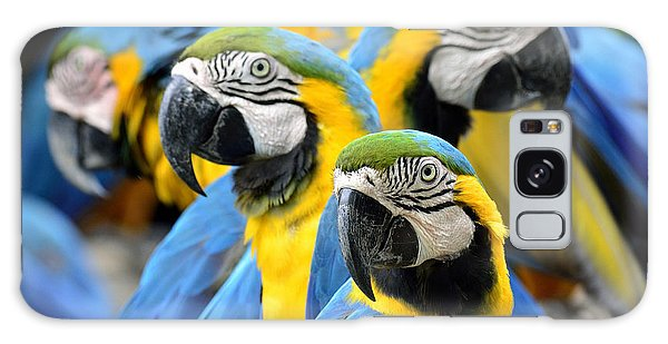 Perches Galaxy Case - Many Of Blue And Gold Macaw Perching by Super Prin
