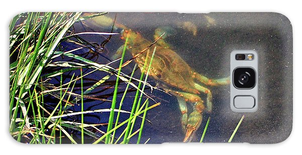 Galaxy Case featuring the photograph Maryland Blue Crab Lurking In An Assateague Marsh by Bill Swartwout Fine Art Photography