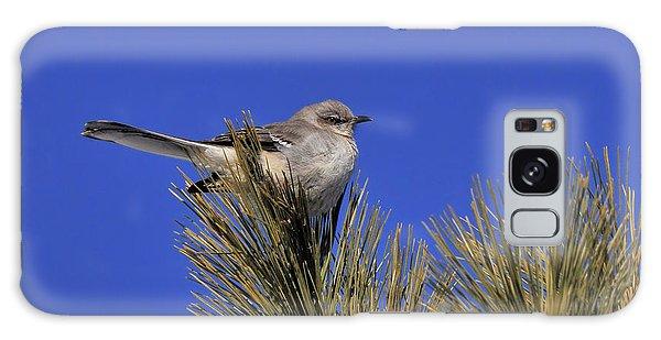 Mockingbird In White Pine Galaxy Case