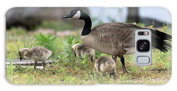 Gosling Galaxy Case - Momma Goose And The Babies by Gary Langley