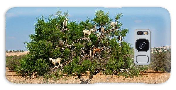 Furry Galaxy Case - Moroccan Goats In An Argan Tree Argania by Aerostato