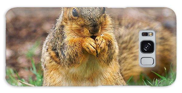 Munching Cute Fox Squirrel Galaxy Case
