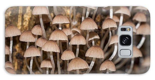 Tasty Galaxy Case - Mushroom In Rainforest by Beejung