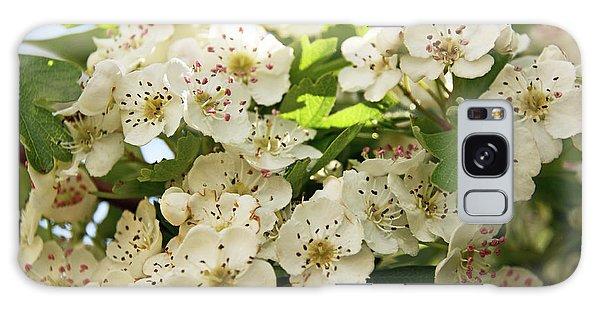 Neston.  Hawthorn Blossom. Galaxy Case