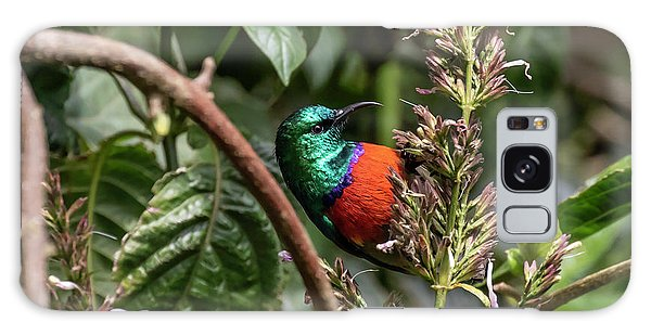 Northern Double-collared Sunbird Galaxy Case
