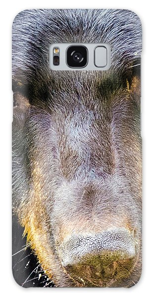 Nosy Bear Galaxy Case