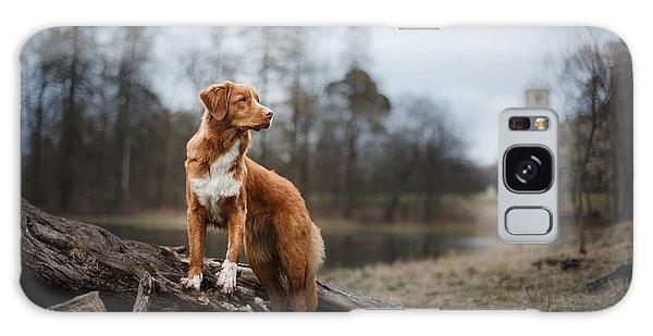 Young Galaxy Case - Nova Scotia Duck Tolling Retriever Dog by Dezy